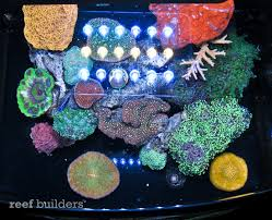 led reef lighting reviews jbj unibody led review simply one of the best aquarium lights for