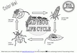 life cycle of ladybug worksheet u2013 best life 2017