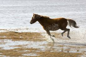 mustang horse running horse running on the beach free stock photo public domain pictures