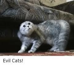 Evil Cat Meme - 25 best memes about evil cat evil cat memes