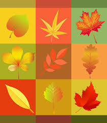 free vector graphic autumn leaves colorful free image on