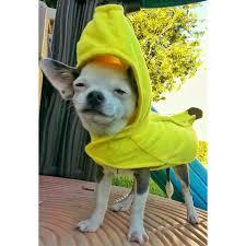 Chihuahua Halloween Costume Chihuahua Banana Halloween Costume Cute Dog Costume