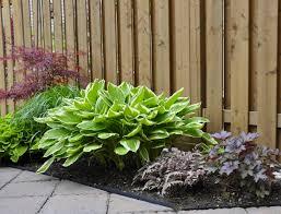 homelife top 15 indoor plants homelife top indoor plants q dxy urg c garden trends
