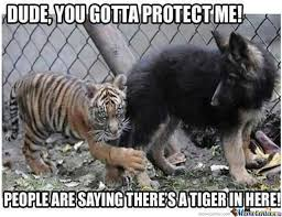 Funny Tiger Memes - 40 most funniest tiger meme images and pictures