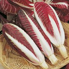 di treviso chicory seeds rossa di treviso precoce view all vegetable