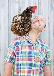 How To Keep Backyard Chickens by Backyard Chickens Dave Ingham 9781743367537 Murdoch Books