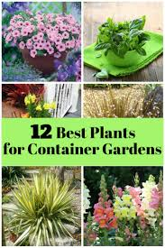 Lettuce Container Garden 12 Best Plants For Container Gardens The Budget Diet