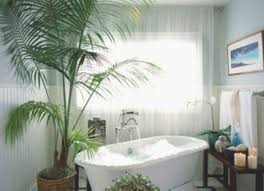 Best Plants For Bathroom Bathroom Scale Bed Bath And Beyond Fresh Home Care