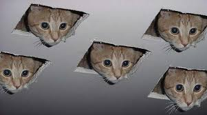 Drywall Meme - image 128519 ceiling cat know your meme