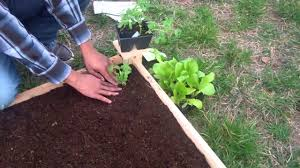 how to plant a raised garden bed the home depot youtube
