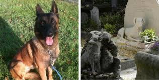 belgian shepherd diesel will diesel be buried in oldest animal cemetery in the world