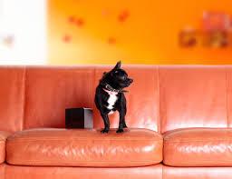 10 smart pet gadgets for your furry friends u2013 gadget flow u2013 medium