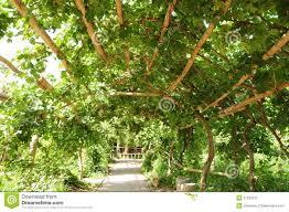 19 rose trellis plans build deck planter bench woodworking