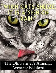 Farmers Almanac Florida Best 25 Weather Almanac Ideas On Pinterest World Almanac