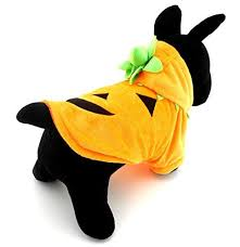 Small Puppy Halloween Costumes 25 Small Dog Halloween Costumes Ideas
