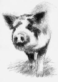 sketch drawings piglet domestic drawing pig