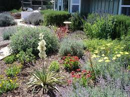 awesome drought tolerant landscaping ideas dream houses