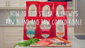 how to feed stella u0026 chewy u0027s raw blend and raw coated kibble dog