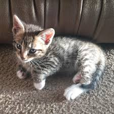 beautiful kittens top 20 just viral adorable cute kitten pictures of the day