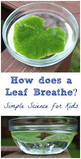 How Do You Spell Backyard How Do Leaves Breathe A Simple Science Experiment For Kids