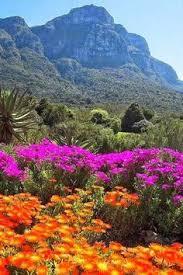 Kirstenbosch National Botanical Gardens by Kirstenbosch National Botanical Garden Set On 90 Acres Along The