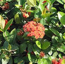 the flora of emancipation park emancipation park jamaica