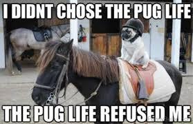 Horse Birthday Meme - 80 super funny horse memes