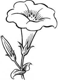 photos simple flower sketch drawing art gallery