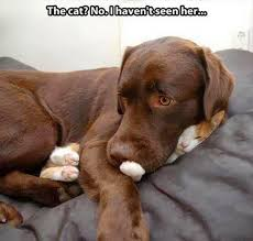 Funny Animal Pictures Memes - the best funny animal memes ever