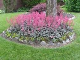 10 Best Perennials And Flowers by 10 Best Lawns U0026 Gardens Images On Pinterest Lawns Chevy Chase