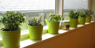 simple kitchen window herb garden interior design for home