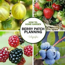 green in real life ideas for the home garden creating a berry patch