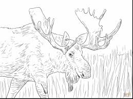 fantastic moose hunting coloring pages with moose coloring pages