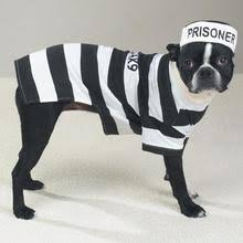 Ewok Dog Halloween Costume Dog Halloween Costumes Dog Costumes Baxterboo