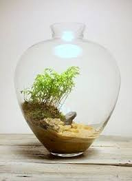 10 things to do with your plant nite terrariums terraria unique
