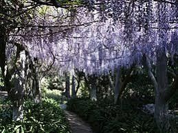 Botanical Gardens Huntington Huntington Library