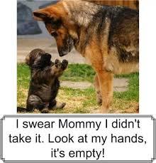 Chubby Meme - my fat chubby puppy likes tricks meme by jio 123 memedroid