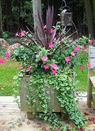 21 best container gardening images on pinterest flower gardening