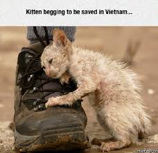 Sad Kitty Meme - the best sad kitty memes memedroid