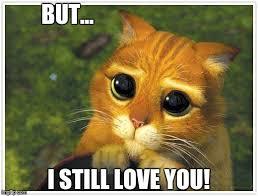 But I Love You Meme - shrek cat meme imgflip