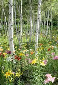 10 best gardens flowers images on pinterest garden wild