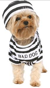 Animal Halloween Costume 37 Adorable Animals Guilty Charged Costumes Puppy