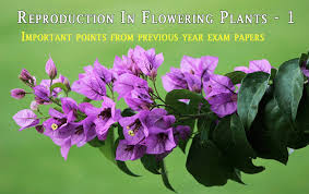 Reproduction In Flowering Plants - csir notes life sciences
