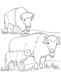 grassland coloring pages 447577