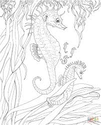 sea horse coloring fresh seahorse coloring pages coloring page