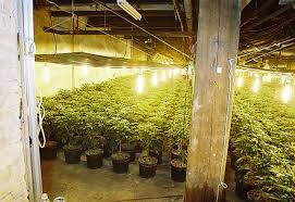 fancy basement grow room 32 for home design inspiration with