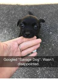Disappointed Dog Meme - googled savage dog wasn t disappointed disappointed meme on me me