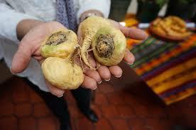 cuisine bio vitalité mélange vitalité cru purasana aliments bio
