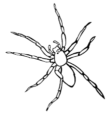 Spider Color Pages Spider Coloring Page Animals Town Animal Color Sheets Spider by Spider Color Pages