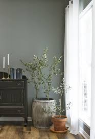 Artificial Tree For Home Decor by Best 25 Indoor Trees Ideas On Pinterest Indoor Tree Plants